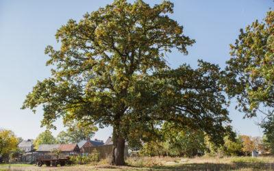 Gumisiowe Drzewo